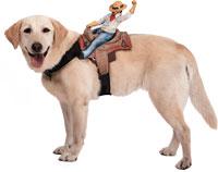 Fahrer Cowboy Hundekostüm - Hund Kostüme